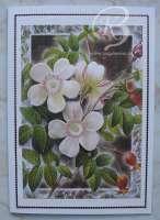 2011-blumenkarte03